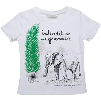 Vêtements Enfant T-shirts manches courtes Interdit De Me Gronder T-shirt manches courtes SARAFI Blanc